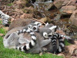 insula Madagascar