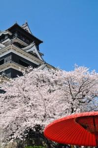 flori de cires